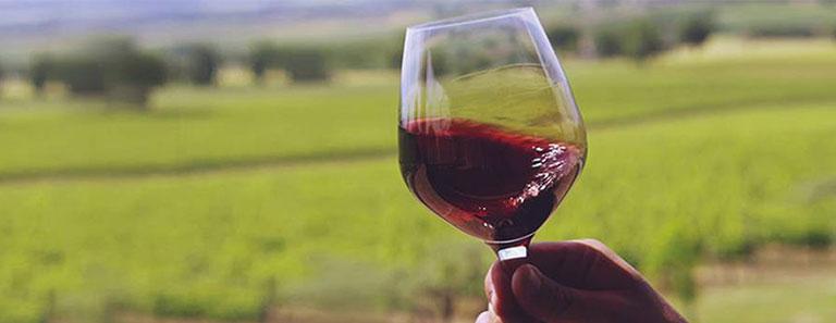 Degustazioni Vini in Cantina da Tiberio