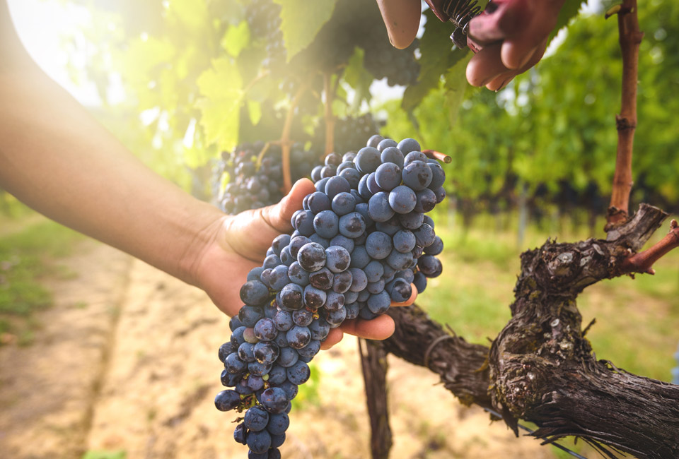 Tiberio Wine