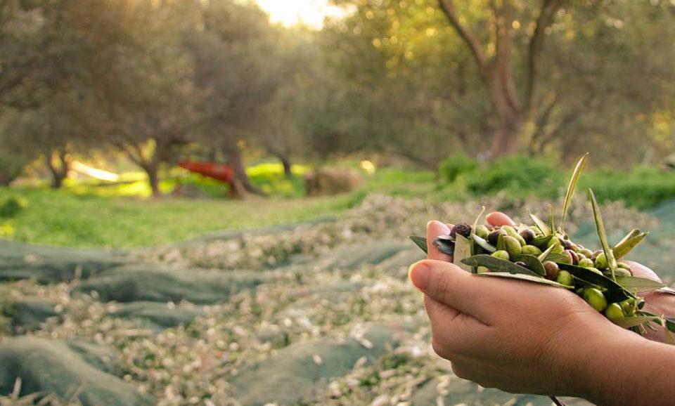 Agriturismo Tiberio
